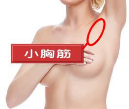 垂れたおっぱいを引き締めるのは小胸筋ですよ
